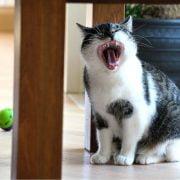 Bachblüten Therapie bei Tieren