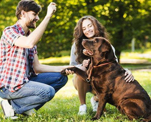 Ein Hundesitter kennenzulernen ist sehr wichtig.