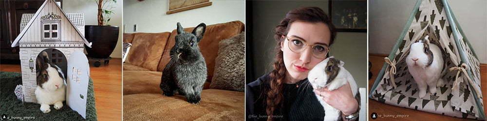 Verschiedene Bilder von Kaninchen und die Beschäftigung der Tieren