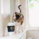 Eine Katze bei einem Becher