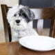 Ein Hund der vor einem leeren Teller sitzt.