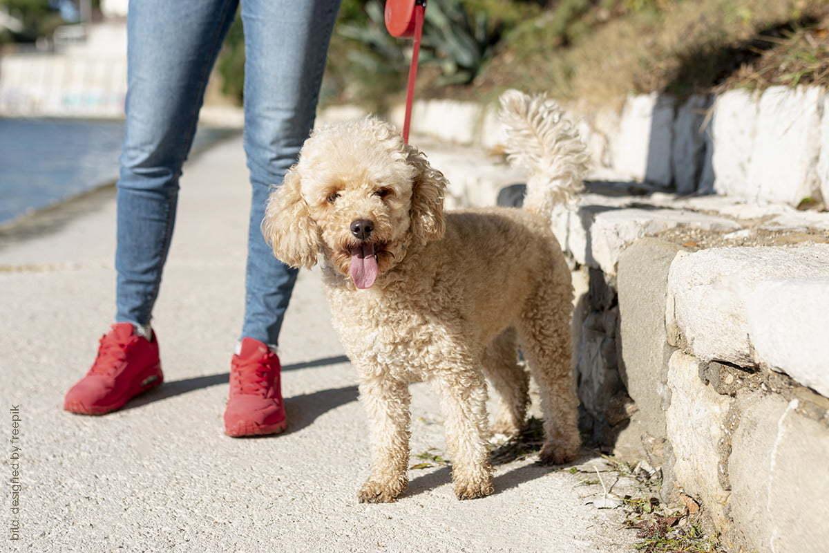 Ausgangssperre Hund Gassi