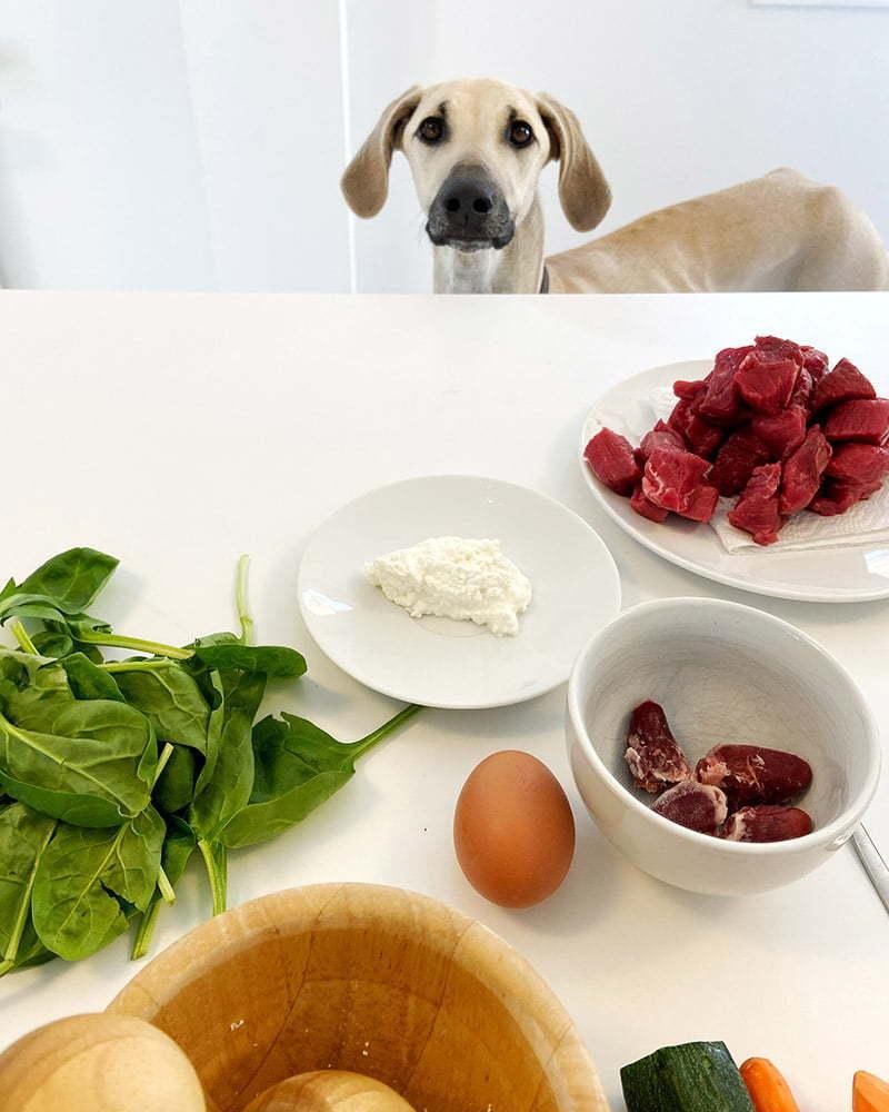 Hund schaut sich Zutaten an für Kochrezept