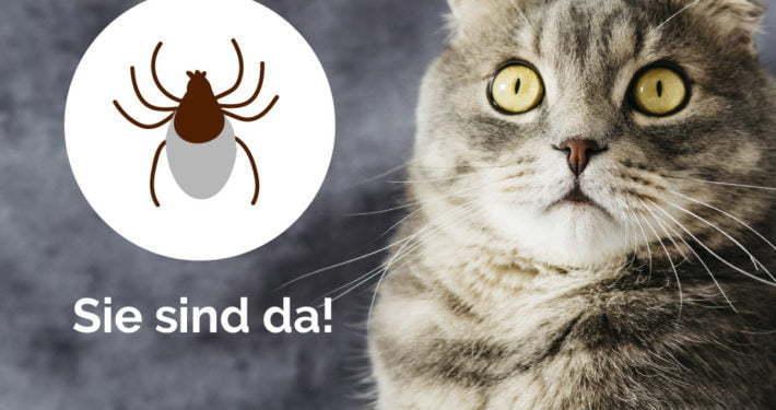Zeckenschutz bei Hund und Katze