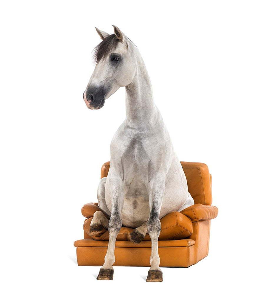 Pferd auf Couch
