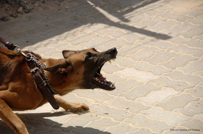 Problemhundetraining / Hundetrainer für Problemhunde